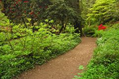 Path in park. A path in cardiff park in spring time with red blooms and green bushes stock image