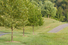 Path in Park. Path and trees in local park for running or walking in nature Stock Images