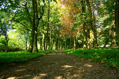 A path in a park. Royalty Free Stock Image