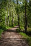 Path in the park. Peaceful place in the forest like park Royalty Free Stock Images