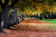Path in the park. Path in the beautiful and colorful park Stock Photography