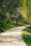 Path in park. In a sunny spring day Royalty Free Stock Image