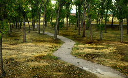 Path through the Park. A meandering path through a park Stock Images