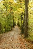 Path in park. Path in autumn park in september royalty free stock images