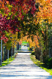 Path in a park Royalty Free Stock Images