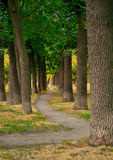 Path in a park Royalty Free Stock Photos