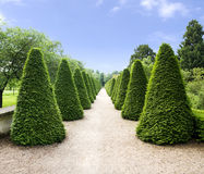Path  in park. Path with yew/thuya trees in park Stock Photography