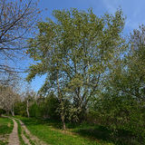 The path in the park along the lake in spring. The path in the park along the lake in spring, the wonderful time for walking among nature Royalty Free Stock Photos