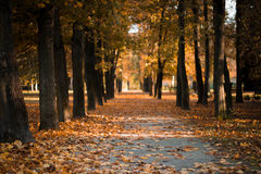 Path in a park during autumn. Nice autumn day in the park. Leaves on the path, shining sun Royalty Free Stock Image
