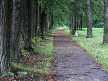 Path in lime avenue stock photography