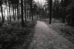Path in the Park stock photography