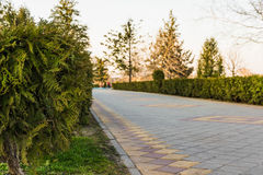 Path in the park on a blurred background. Cypress on the blurred background of the park path paved with brickwork Stock Photos