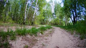 Walk in the Park on a clear day. Path in the Park on a clear day, the nature of Eastern Europe stock photo