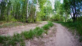 Walk in the Park on a clear day. Path in the Park on a clear day, the nature of Eastern Europe stock image