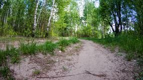Walk in the Park on a clear day. Path in the Park on a clear day, the nature of Eastern Europe royalty free stock photography