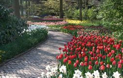 Path in park and colorful tulips Stock Image