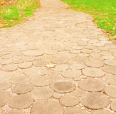 Path in park Royalty Free Stock Images