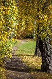 Path in the Park in Golden autumn stock photos