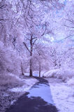 A path through the park - Infrared landscape Royalty Free Stock Images