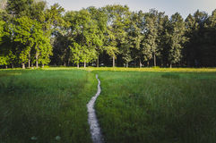 The path in the park Stock Images