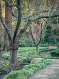 Path through park. A path meanders between the trees in the Japanese garden in Lithia Park in Ashland, Oregon in winter Royalty Free Stock Images