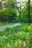 The path in the park. The morning landscape. Divine morning Royalty Free Stock Image