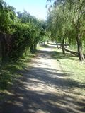 Path in the park the morning sunshine Royalty Free Stock Photo