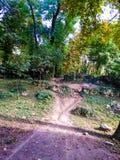 Path in park Stock Photos