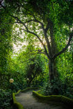 Path in the park Pura Goa Lawah, Bali, Indonesia Royalty Free Stock Photography