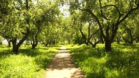 Path through the park stock video