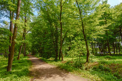 Path in a park Stock Photography