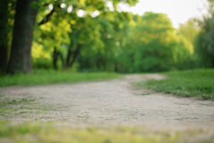 Path in park in summer evening Royalty Free Stock Photography