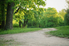 Path in park in summer evening Stock Image