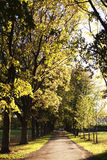 Path in park. In a sunny autumn  day Stock Image