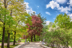 A path in a park among trees with blossoming leaves on Elagin Island in St. Petersburg Royalty Free Stock Photos