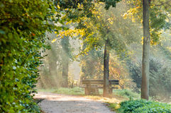 Path in a park Royalty Free Stock Photography