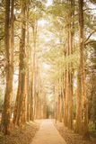 Path in the park vintage retro Royalty Free Stock Image
