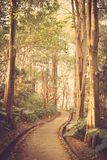 Path in the park vintage retro Royalty Free Stock Photography