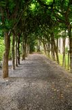 Path in the park. Walking path in the park in Oslo Stock Photography