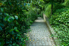 Path in the park. A walkpath in a park, surounded by plants Royalty Free Stock Photos