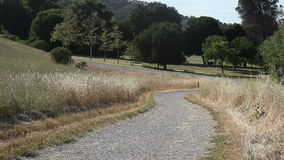 Path in a park stock footage
