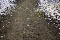 Path in the park in winter Stock Image