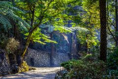 The path passes between the trees. The path passes between the trees glowing in sunlight Royalty Free Stock Image