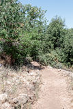 Path  passing through a wooded slope and descending to the Amud Royalty Free Stock Images