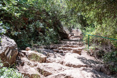 Path passing through a wooded slope  and descending to the Amud River. Path passing through a wooded slope and descending to the Amud River Stock Photography
