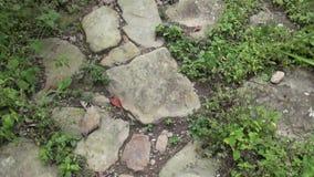 Path, Pathway, Brick, Ground, Walking stock footage