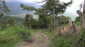 Path, Pathway, Ground, Walking stock video