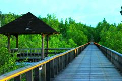The path. Path of a pier in mangrove forest Royalty Free Stock Photo