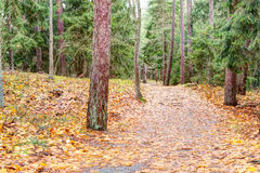 Path in the pine forest. Autumn season Stock Image