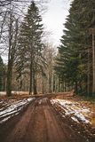 Path in pine forest. Dirt road in pine forest royalty free stock images